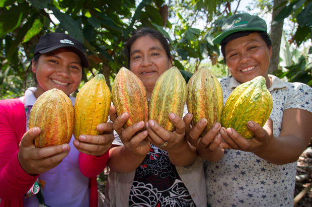Sustainability for Cacao Farmers